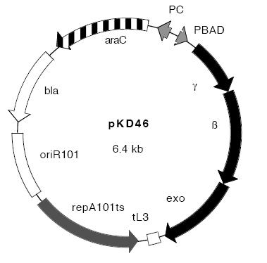 pCMV-Tag3B载体图谱