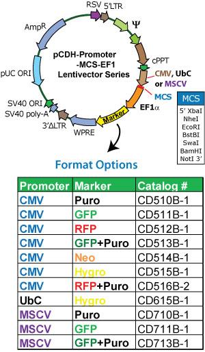 pCDH-MSCV-MCS-EF1-copGFP载体图谱