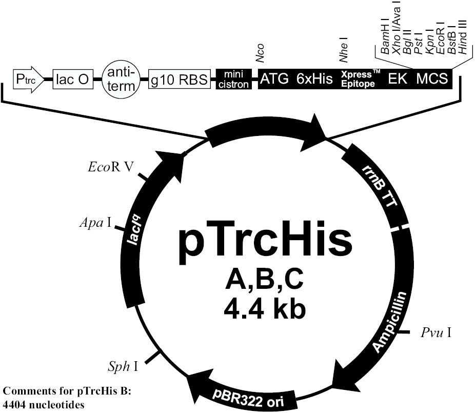 pTrcHisA 载体图谱